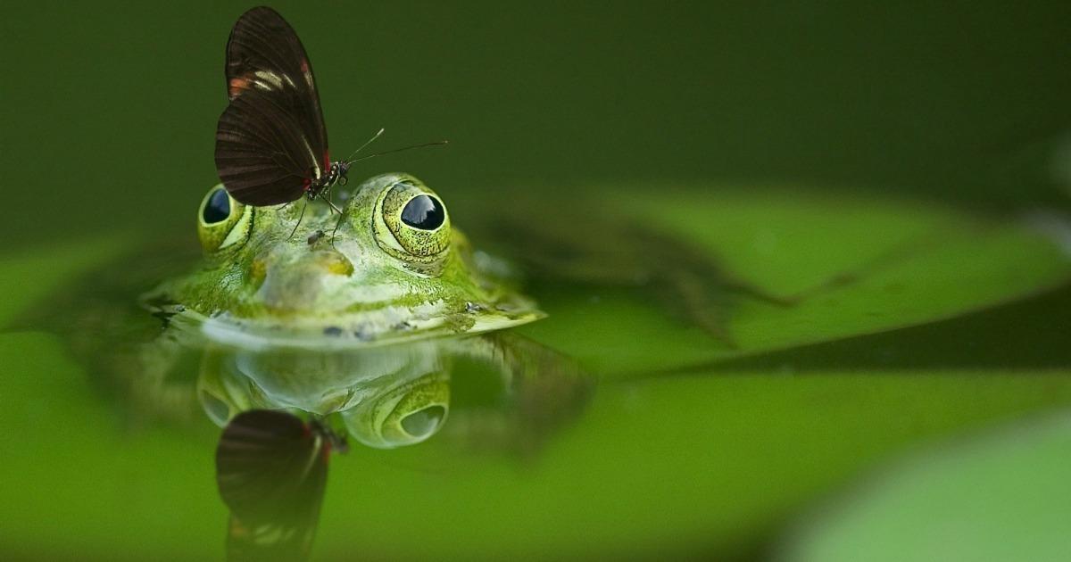 Diferencia Entre Animales Vertebrados E Invertebrados Diferenciador