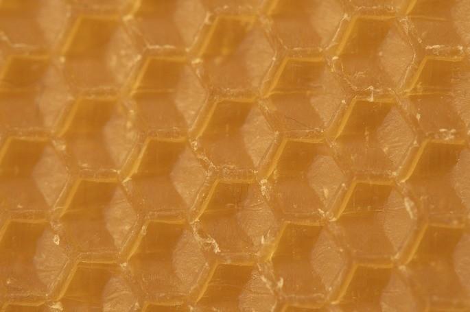 estructura del panal de abeja con cera