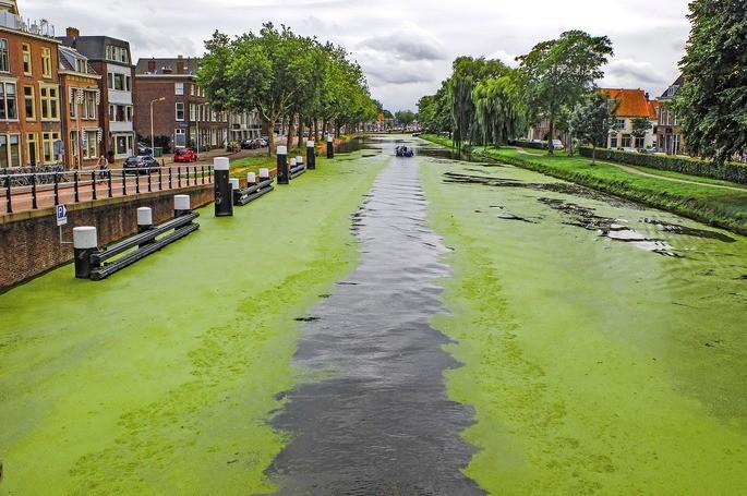 eutrofizacion de un canal como consecuencia de la contaminacion del agua