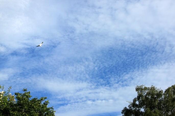 tipos de nubes cirrocumulos