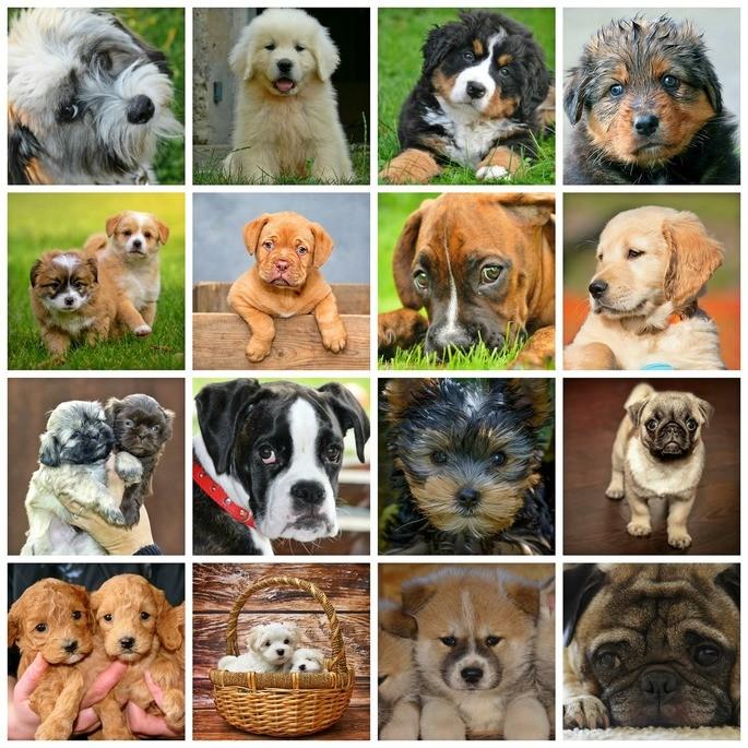 especie clasificacion de los seres vivos razas