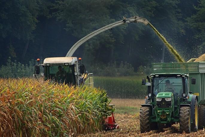 recoleccion mecanizada en campos de maiz