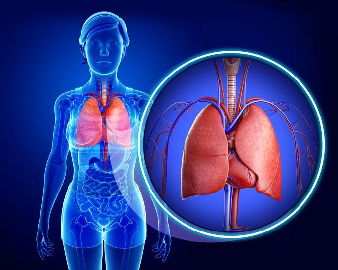 pulmones de un ser humano