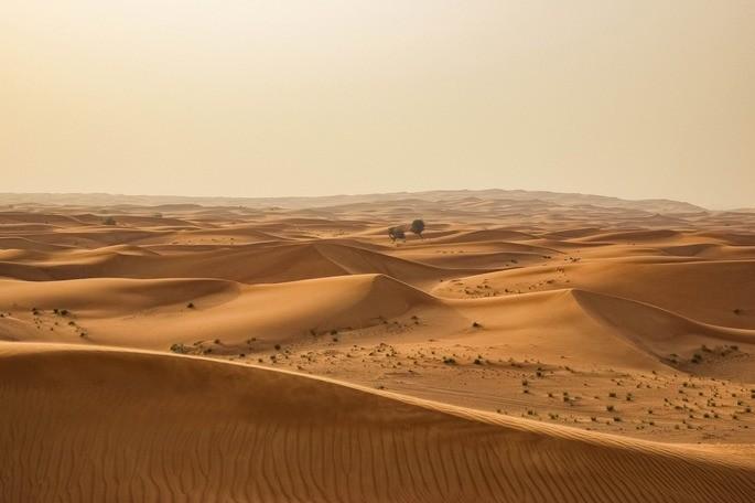 El desierto es un ecosistema natural