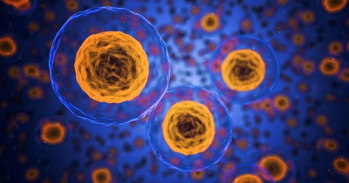 Cuadro Comparativo De Los Procesos De Mitosis Y Meiosis