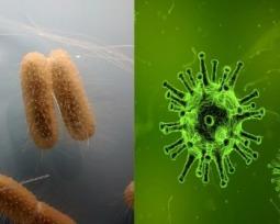 Virus y bacteria