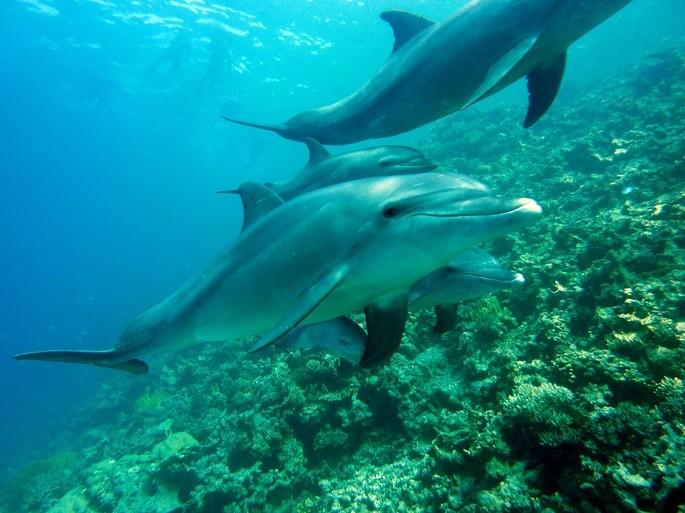 delfines mamíferos vertebrados