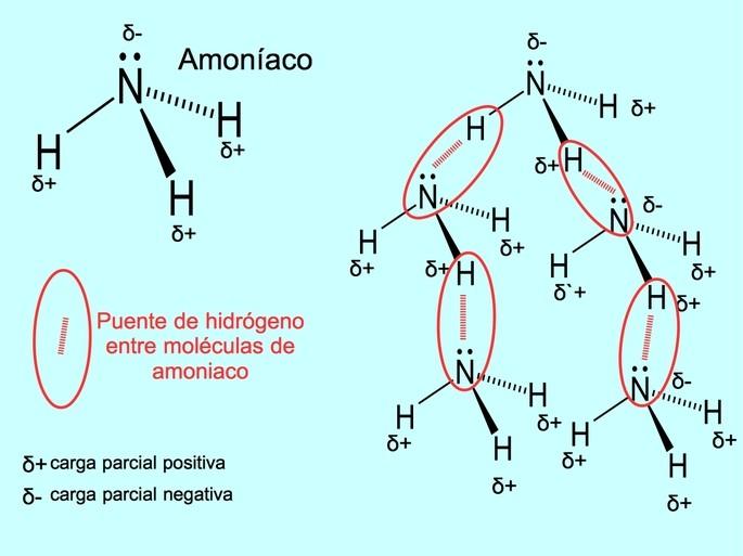 Enlaces de hidrogeno entre moleculas de amoniaco