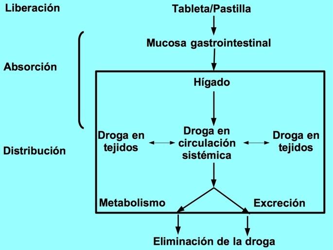 mapa conceptual farmacocinética