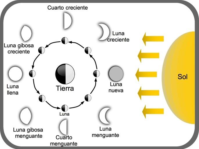 diagrama de las diferentes fases de la luna y su relacion con el Sol y la Tierra