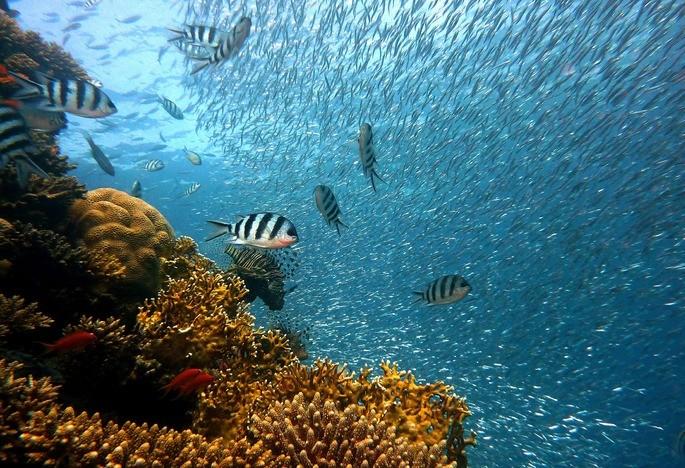 el arrecife coralino es un ecosistema marino