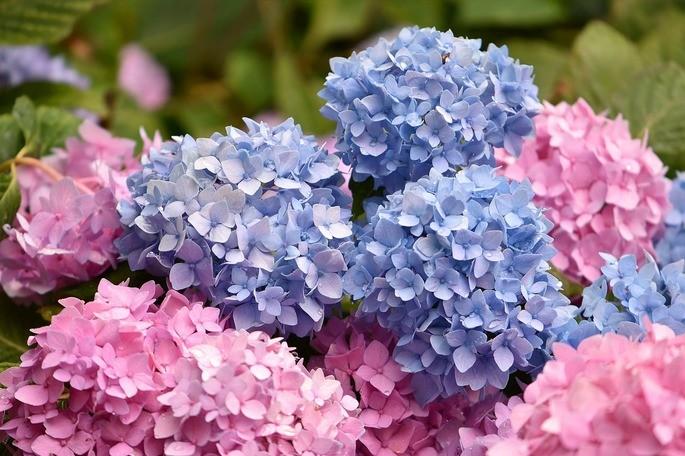 fenomeno quimico es el color de las flores