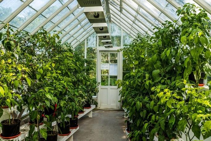 plantas creciendo dentro de un invernadero calentado por la energia solar
