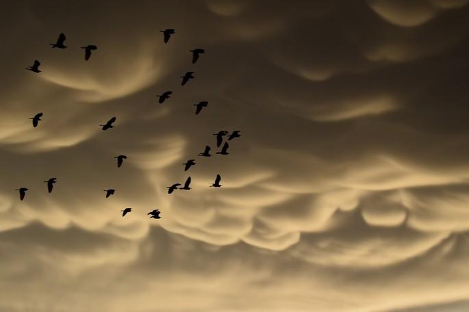 tipos de nubes altoestrato mamma
