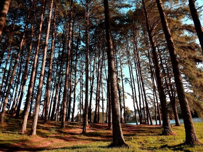plantacion forestal como un ecosistema artificial manejado por el humano