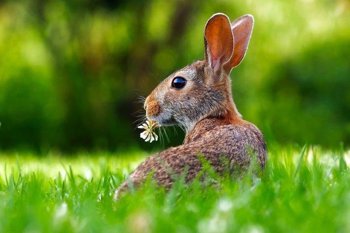 factores bioticos una grama y plantas con un conejo