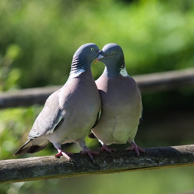 sistema de comunicación animal, pájaros tocando sus picos