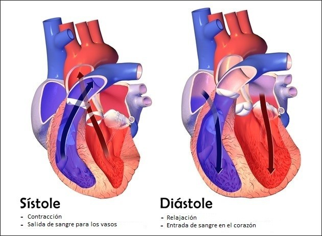 presion arterial diastolica baja que significa