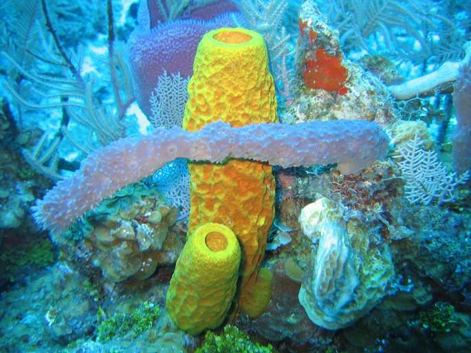 esponjas marinas animales invertebrados