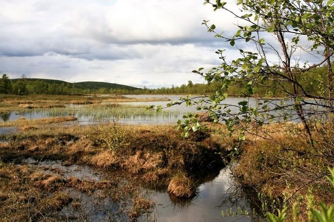 humedales bioma del tipo acuatico