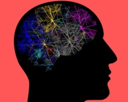 24 tipos de aprendizaje: ¿Cuál es el tuyo?