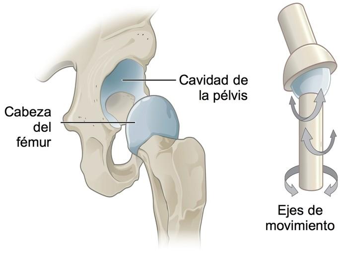 Articulación de la cintura