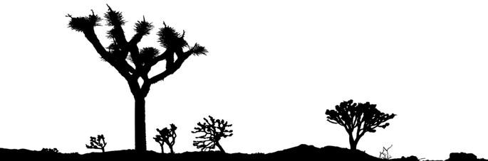 bioma desertico