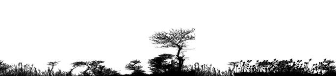 bioma de mediterraneo