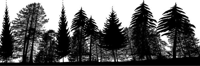 perfil de bioma taiga
